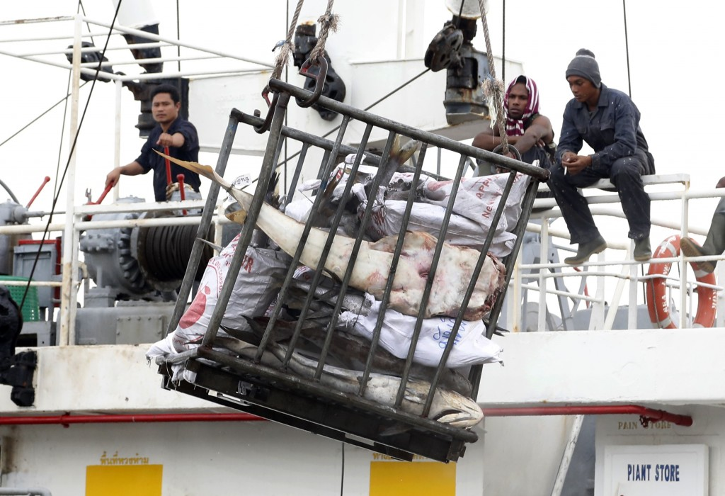 In this Nov. 22, 2014 photo, workers in Benjina, Indonesia, load fish onto a cargo ship bound for Thailand. (AP Photo/Dita Alangkara)