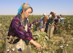Uzbek students pick cotton, in the Uzbek town of Termez. (AP Photo/Efrem Lukatsky)