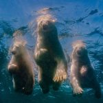 In polar photography, a battle with fear and cold